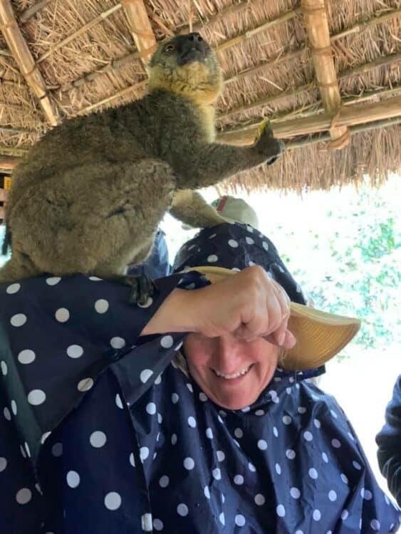 Lemur Island fun