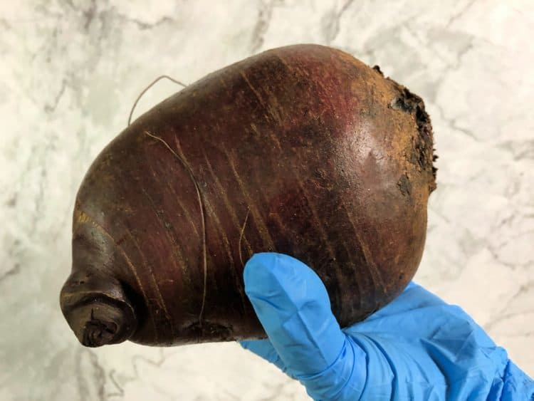 gloved hand holding a large red beet