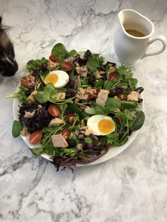 salad with cat's nose sniffing at the edge