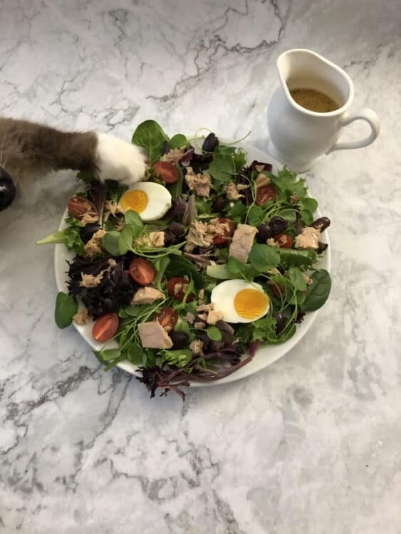 Cat's foot reaching into the salad