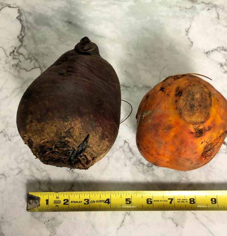 large uncut beets, one red and one golden